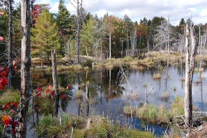 Nearby beaverpond in fall colours